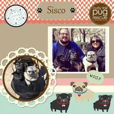 CTPR Alum Sisco  #adoptdontshop