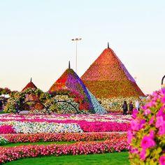 حديقة الزهور ميراكل، دبي الإمارات  Miracle Garden, Dubai, UAE  By @sharlajeanah