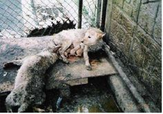Petition · Boycott S. Korea until they stop the torturing and eating companion animals · Change.org