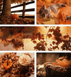Fall Moodboard