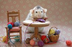 pet rats - Google Search
