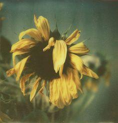 wilted sunflower tattoo idea