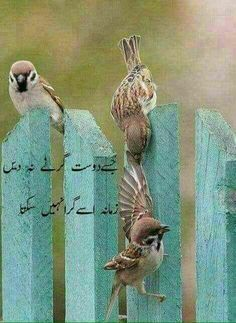 Bird Quotes Inspirational In Urdu Ideas Cute Relationship Quotes, Cute Relationships, Tweety Bird Quotes, Bird Cage Centerpiece, Red Bird Tattoos, Funny Birds, Bird Silhouette, Painting Gallery, Flower Pictures