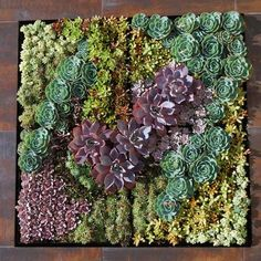 Succulent Planted 45 Cell Grovert Planter
