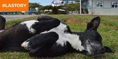 LA STORY - Au Brésil, un chien refuse obstinément de quitter le parking de l'hôpital où son maître est décédé voilà huit mois.