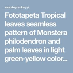 Fototapeta Tropical leaves seamless pattern of Monstera philodendron and palm leaves in light green-yellow color tone, tropical background. - coloray.pl