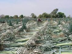 Do you know the difference between Tequila and Mezcal? I didn't either, until I read this article! Now I'm salivating over a handcrafted Mezcal! The things I learn while editing the Mexico edition of the Becoming an Expat guidebook series www.becominganexpat.com