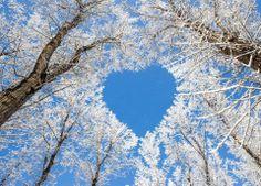 Hearts in Nature Lake Pupuke, Aukland New Zealand Winters Natural Heart-Aww Sooo Beautiful. Nature is amazing Greece Heart In Nature, All Nature, Heart Art, Amazing Nature, Love Heart, Heart Real, Winter Szenen, Winter Time, Winter Season
