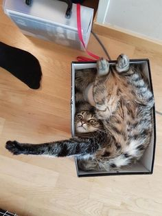 @iizcat Be sure to read the manual before assembling your cat