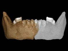 Remains found on the Tibetan Plateau suggest a large hominin adapted to high-altitude life. Human Evolution, At Last, Nature Journal, Fossils, Mysterious, Mystery, Cold, Life, Fossil