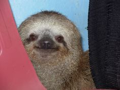 The 27 Happiest Sloths In The World