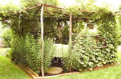 Garden Structure - rough wood structure with plant walls and ceiling - lemon grass to keep the mosquitoes away?