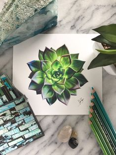 Glowing Green Succulent Drawing ORIGINAL & Prints Glowing Green Succulent Drawing ORIGINAL & Prints <br> A glowing drawing of a colorful succulentOriginal: Cool Art Drawings, Pencil Art Drawings, Realistic Drawings, Colorful Drawings, Art Drawings Sketches, Pencil Sketching, Horse Drawings, Drawing Art, Colour Drawing