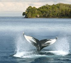 Colombia - Ruta de ballenas, Choco.