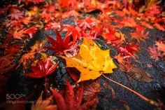 Wet fallen leaves on the rain by uwxvcar01i