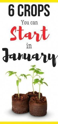 You Grow In January? What can you grow in January? Here's vegetable gardening for beginners ideas and when to plant your seeds!What can you grow in January? Here's vegetable gardening for beginners ideas and when to plant your seeds! Vegetable Garden Planner, Indoor Vegetable Gardening, Vegetable Garden For Beginners, Organic Gardening Tips, Hydroponic Gardening, Gardening For Beginners, Container Gardening, Flower Gardening, Vegetable Ideas