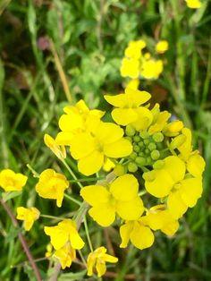 黄色い蝶☆