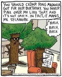 Image result for birch tree joke