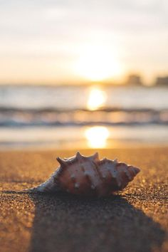 #beach #seashell #su