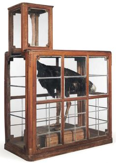 A Custom Cabinet for a Taxidermied Ostrich - Neatorama