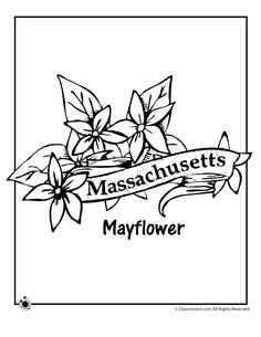 State Flower Coloring Pages Massachusetts State Flower Coloring Page – Classroom Jr.