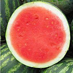 "Kernlose Wassermelone ""Denise""F1 1 Pflanze ohne Kerne"