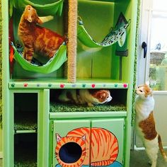 AWESOME DIY Cat Hotel made from a recycled TV entertainment center. DIY Cat Tree. DIY recycled Cat Bed