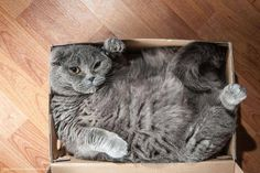 I have fitted in before, the box has shrunk!