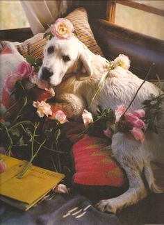 My dog would never sit still long enough to take this pic let alone cover him in flowers.
