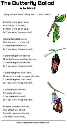 Sing the butterfly ballad to learn the stages of a butterfly's life cycle.