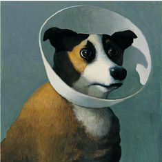 michael sowa dog with collar