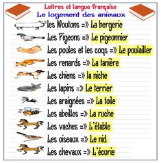 Printing Videos Education Children Learn French With Alexa Presents French Language Lessons, French Language Learning, French Lessons, French Expressions, French Teacher, Teaching French, French Articles, French Resources, French Flashcards
