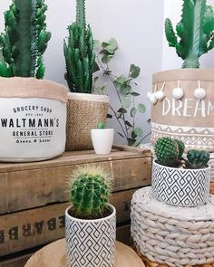 ui s'y frotte, s'y pique 🌵 📸 @llilooscandilove Cactus lovers, this is all for you 🌵 ----------------------------------------------------