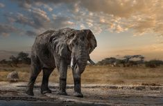 dusk and dawn – Bruna Photography Dusk Till Dawn, Elephant, Photography, Animals, Photograph, Animales, Animaux, Fotografie, Elephants