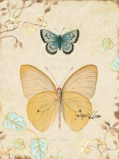 tcd_naturesflora1.jpg mariposas