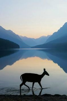 Nature Silhouette - Doe at sunrise - Bowman Lake, Glacier National Park, Montana - Photo by Kevin Lefevre Image Nature, All Nature, Amazing Nature, Beautiful Creatures, Animals Beautiful, Montana National Parks, Tier Fotos, Belle Photo, Beautiful World