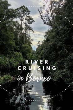 Where to take the best orangutan pictures? Come along for the ride through the jungle of Tanjung Puting in Borneo, Indonesia where you can find them roam wild. Borneo Travel, Malaysia Travel, Bali Travel, Wanderlust Travel, Ubud, Bali Outfit, Borneo Orangutan, Orangutans, Vietnam Travel