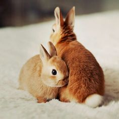 """Red-headed Bunnies - """"I got your back lil bro"""""""