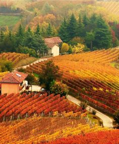 Autumn in ITALY - A time when everyone will have enough food, peace and quiet, security, their own home, their own land inheritance....forever.