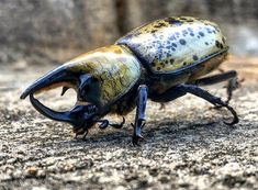 Beatle outside my office fun funny funny pics Rhino Beetle, Cool Monsters, Funny Cat Pictures, Creature Design, Funny Cats, Fun Funny, Beautiful Creatures, Art Reference, Bugs