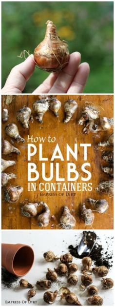 How To Plant Bulbs In Containers | eBay