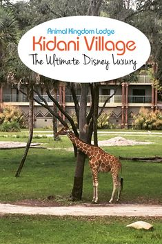 Kidani Village at Animal Kingdom Lodge - A complete review of the villas at Kidani Village, with tips for room selection, dining, and activities.