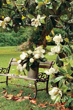 Magnolia - Flowering Southern Trees You Need to Plant Now - Southernliving. The massive flowers of the Southern magnolia have become iconic in our region. It's the state flower of Mississippi and Louisiana and for good reason—it stuns year round. The blooms are wonderfully fragrant and borne among their leaves as opposed to the ends of the branches.