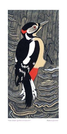 'Great Spotted Woodpecker' by Robert Gillmor (A444)
