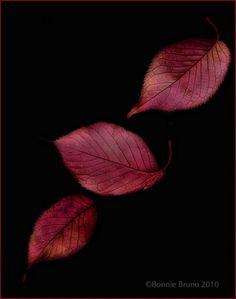 Tumbling Red Leaves   #art #photography #prints #decor