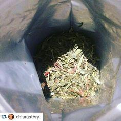 Encore une magnifique photo de Chiara ! #Repost @chiarastory with @repostapp  Un Noël Vert de @tea_tower : thé vert parfumé amandes clous de girofle carthame et gingembre #tea #teatime #teatower #thé #thévert