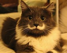 A cat with a Salvador Dali mustache has become an Internet sensation. Hamilton, dubbed the 'Hipster Cat' has a white marking under his nose that looks just like the artist's famous facial hair.