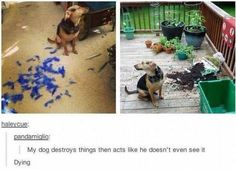 The guiltiest dog: | 32 Of The Greatest Things That Happened On Tumblr In 2014