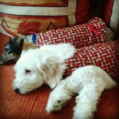 Benitta y Luna, descansando.