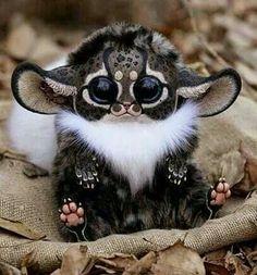 Furby or Gremlin?